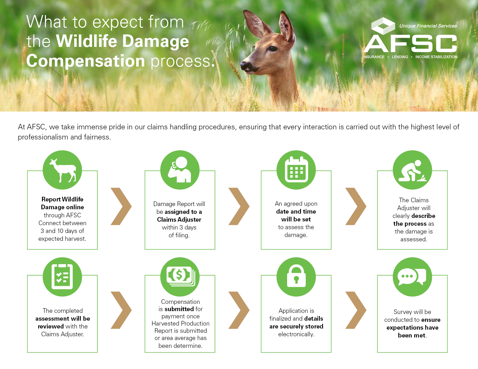 An infographic outlining the Wildlife Damage Compensation process